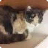 Adopt A Pet :: Sally - Diamond Springs, CA