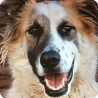 Adopt A Pet :: PANDA VON PHILO - Los Angeles, CA