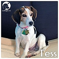 Adopt A Pet :: Tess - Pittsburgh, PA