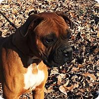 Adopt A Pet :: Stallone - Pewaukee, WI