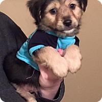 Adopt A Pet :: Oakley - Willingboro, NJ