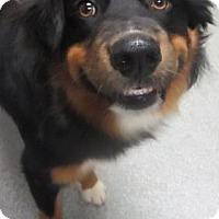 Adopt A Pet :: Cam - Lincolnton, NC