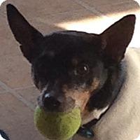Adopt A Pet :: Hampton - MINNEAPOLIS, KS