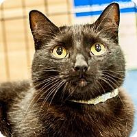 Adopt A Pet :: Truffles - Gainesville, FL