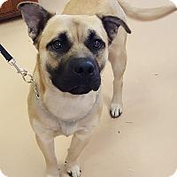 Adopt A Pet :: Parker - Walden, NY