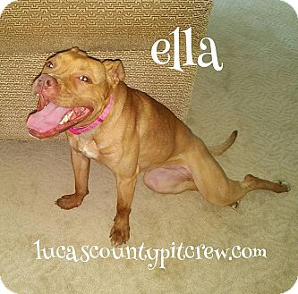 Labrador Retriever/Boxer Mix Dog for adoption in Toledo, Ohio - Ella