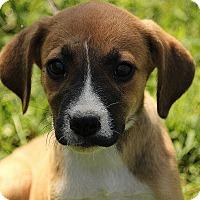 Adopt A Pet :: Berkeley - Washington, DC