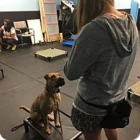 Adopt A Pet :: Nacho - ottawa, ON