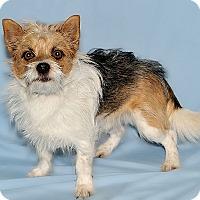 Adopt A Pet :: Charlie - Gatineau, QC