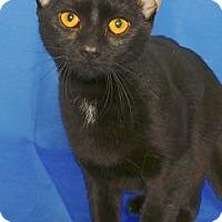 Adopt A Pet :: VALKA - Gloucester, VA