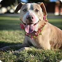 Adopt A Pet :: Letty - St. Louis, MO