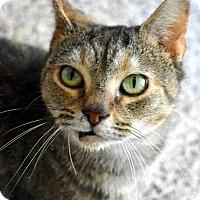 Adopt A Pet :: Clara - Aiken, SC