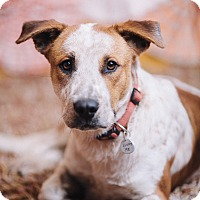 Adopt A Pet :: Chuck - Portland, OR