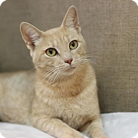 Adopt A Pet :: Babyrella - $10! - Midland, MI