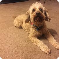Adopt A Pet :: Bonzo 6yr Adopted - Mentor, OH