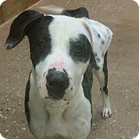 Adopt A Pet :: Rocket *Petsmart GB* - Appleton, WI