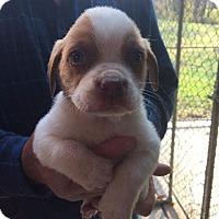 Adopt A Pet :: Kendall - Maysville, KY