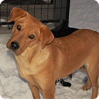 Adopt A Pet :: Lorelai - Sawyer, ND