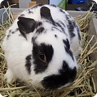 Adopt A Pet :: Orlando - Los Angeles, CA