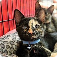 Adopt A Pet :: Georgia - Athens, GA