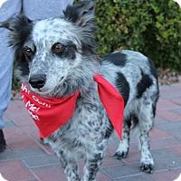 Adopt A Pet :: LUCKY DOG - Las Vegas, NV