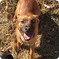 Adopt A Pet :: Jinks - Littleton, CO