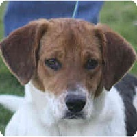 Adopt A Pet :: Jane-in MAINE! - kennebunkport, ME