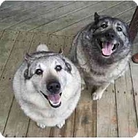 Adopt A Pet :: Moose & Sage - Belleville, MI