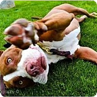 Adopt A Pet :: Siera - Mesa, AZ