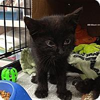 Adopt A Pet :: Susan - Island Park, NY