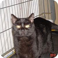 Adopt A Pet :: Midnight - Monroe, GA