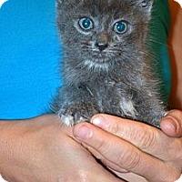 Adopt A Pet :: Sam - Xenia, OH