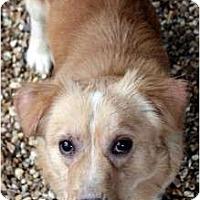 Adopt A Pet :: Abner - Murfreesboro, TN