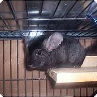 Adopt A Pet :: Morgan - Avondale, LA
