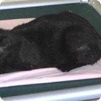 Adopt A Pet :: Samantha 0304 - Jacksonville, FL