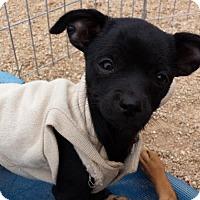 Adopt A Pet :: JANET JACKSON - Scottsdale, AZ
