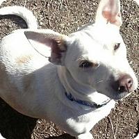 Adopt A Pet :: Sparky - Chewelah, WA