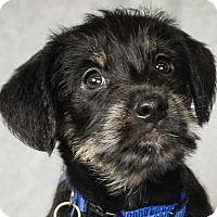 Adopt A Pet :: Demi - Minneapolis, MN