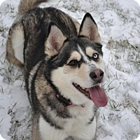 Siberian Husky Mix Dog for adoption in East Smithfield, Pennsylvania - Kimba