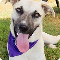 Adopt A Pet :: Hogan - Patterson, CA