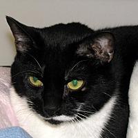 Adopt A Pet :: Suzy - Ashland, MA