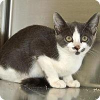 Adopt A Pet :: Splash - Englewood, FL