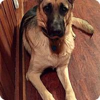 Adopt A Pet :: Arwen(CL) - Greensboro, NC