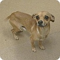 Adopt A Pet :: Bitzy - Las Vegas, NV