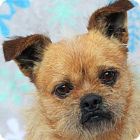 Adopt A Pet :: Oscar - Red Bluff, CA