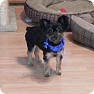 Adopt A Pet :: Grace Ellen Aspinwall