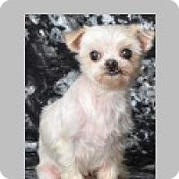 Adopt A Pet :: Suzie - Pittsboro, NC