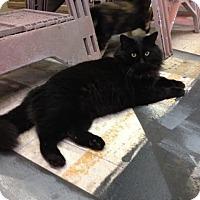 Adopt A Pet :: Bart - Nashville, TN