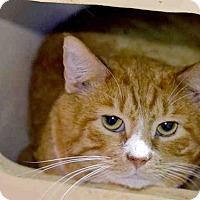 Adopt A Pet :: SOLAR - Pittsburgh, PA