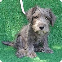 Adopt A Pet :: Karlee - San Diego, CA